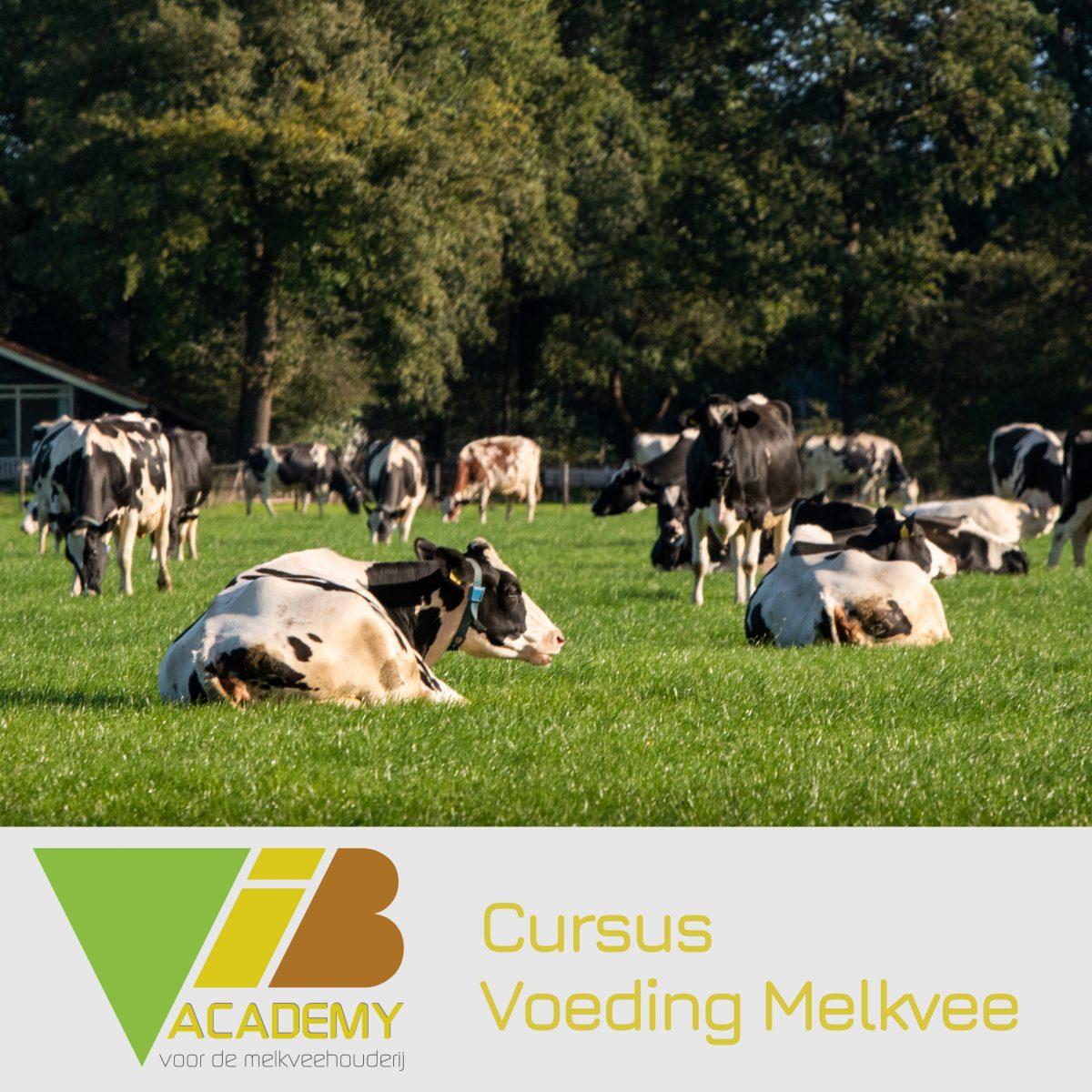 Cursus Voeding Melkvee